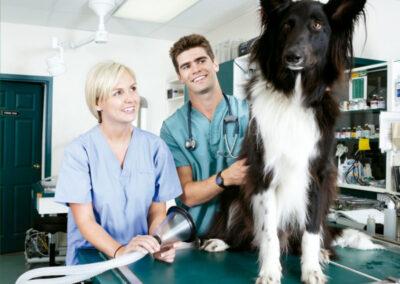 Ayudante técnico veterinario